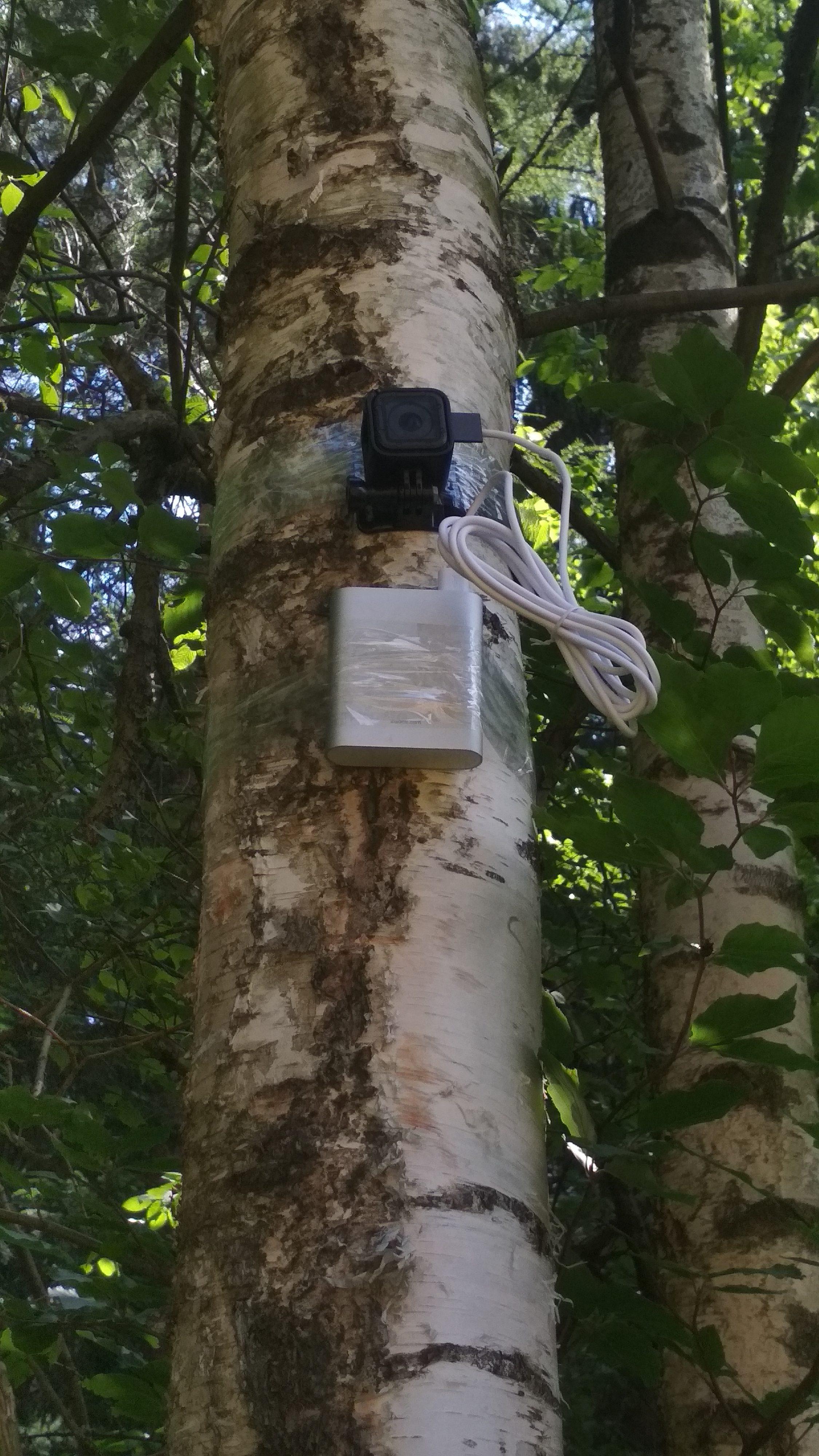 GoPro na stromě